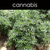Cannabis Fragrance Oil