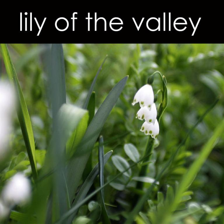 Lily of the Valley Sugar Scrub