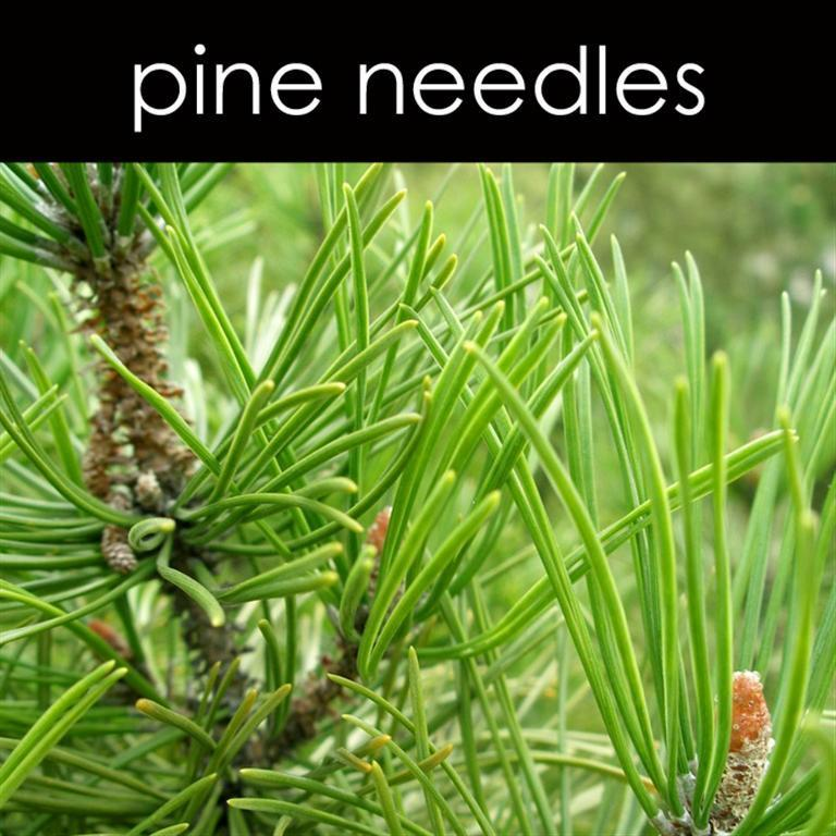 Pine Needles Fragrance Oil