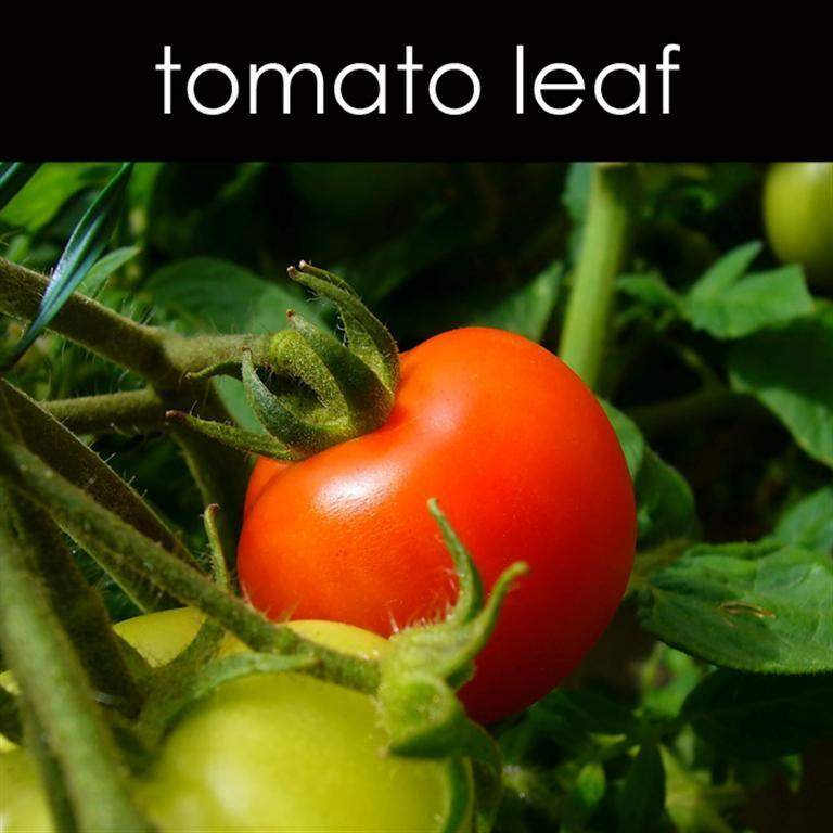 Tomato Leaf Reed Diffuser