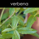 Verbena Fragrance Oil