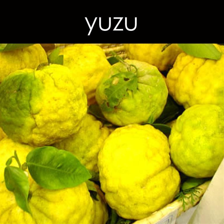 Yuzu Fragrance Oil
