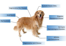 Load image into Gallery viewer, Cold Laser Therapy Device for dogs - laserfocusenergy.com