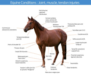 Cold Laser Therapy Device for horses - laserfocusenergy.com