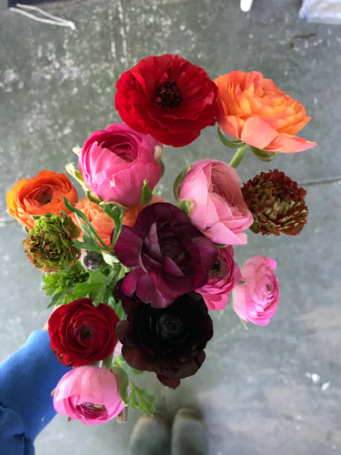Ranunculus Wrapped Bunch