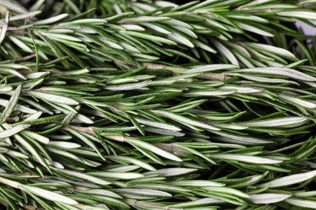 Rosemary my dear old friend 🌿