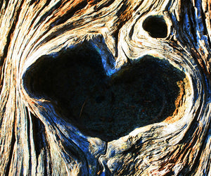 Tree with Heart - [product_type - Craig Carmichael - Aqua Terre Artisans