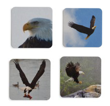 Coaster Set - Eagles - [product_type - Aqua Terre Artisans - Aqua Terre Artisans
