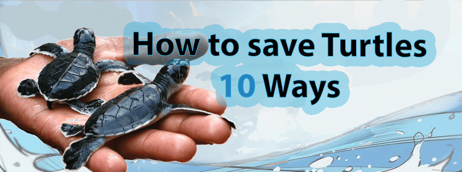How to save turtles