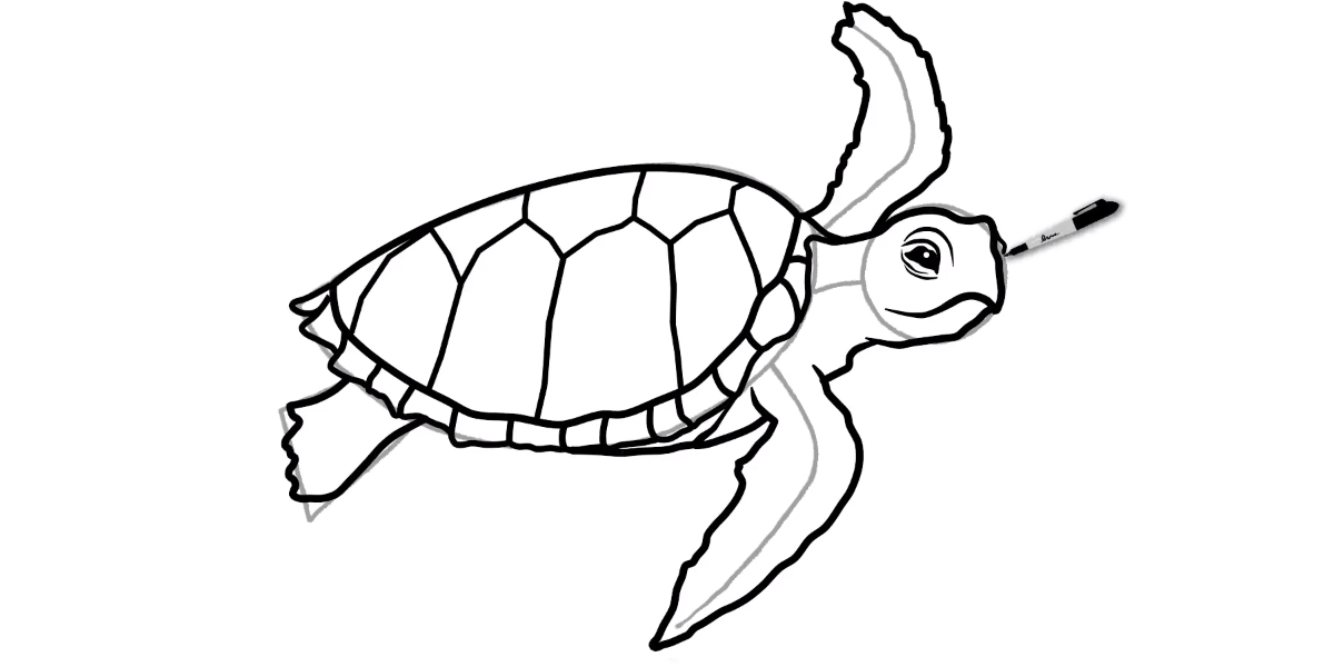 How to draw a Sea Turtle - Step 10 - Turtle Store
