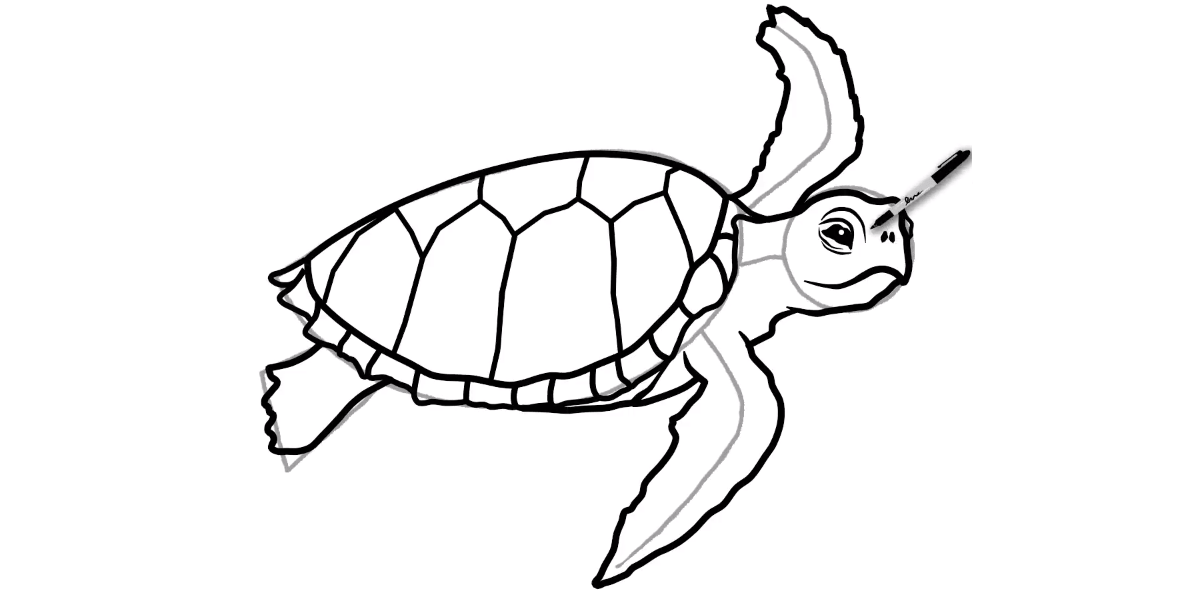 How to draw a Sea Turtle - Step 11 - Turtle Store