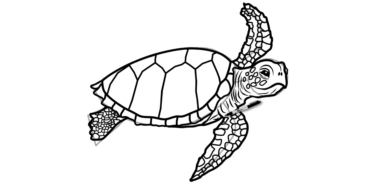 How to draw a Sea Turtle - Step 14 - Turtle Store