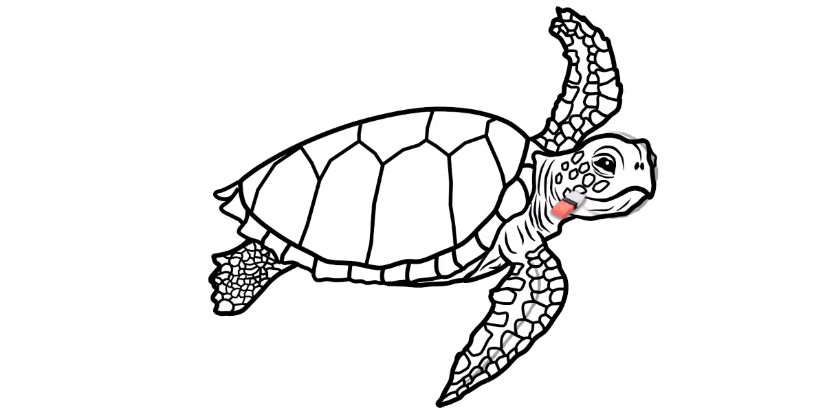 How to draw a Sea Turtle - Step 15 - Turtle Store