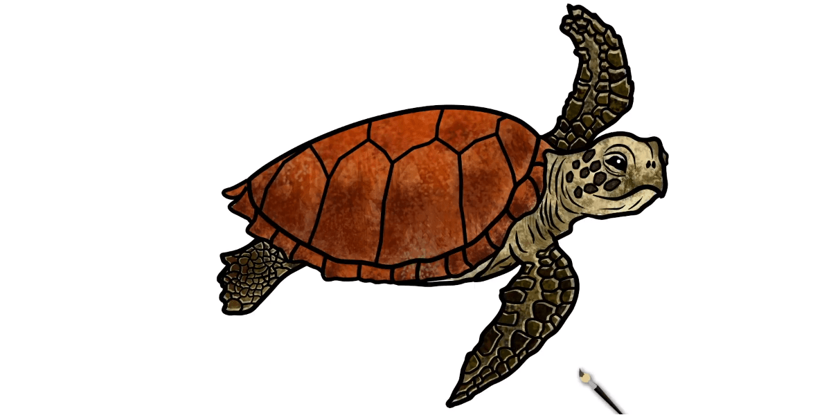 Final Step of How tu draw a sea turtle