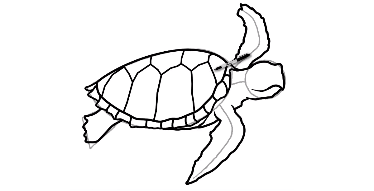 How to draw a Sea Turtle - Step 8 - Turtle Store