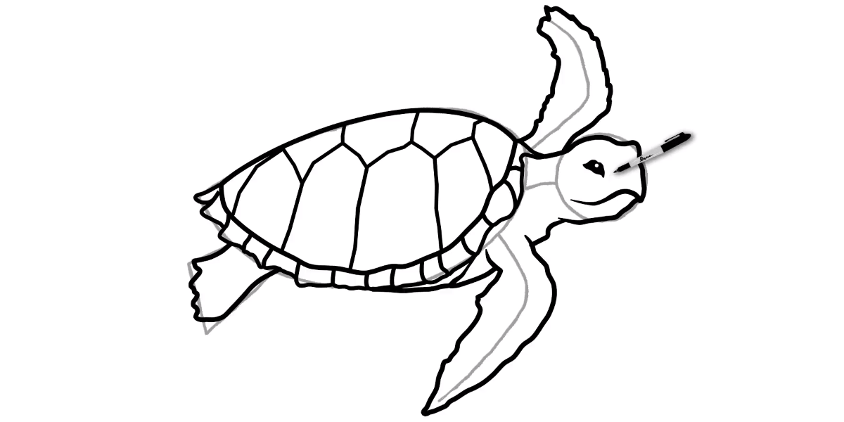 How to draw a Sea Turtle - Step 9 - Turtle Store