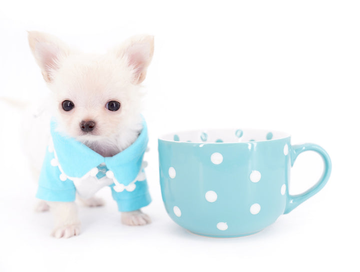 Suri Micro Teacup LC White Boy