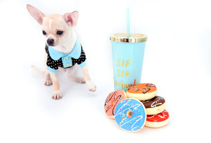 Micro Teacup Summer Puppies – Hollywood Chis