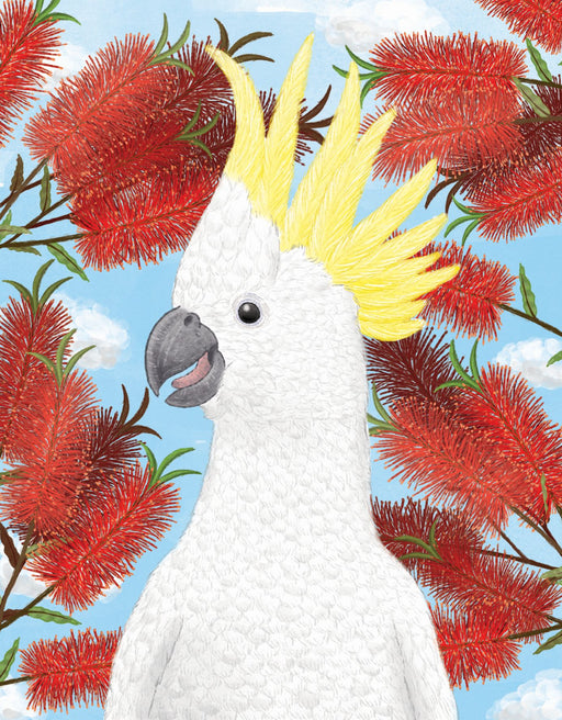 Squirrel Design Studio-Cockatoo Bottlebrush Card-mott-and-mulberry-shop-online-brisbane
