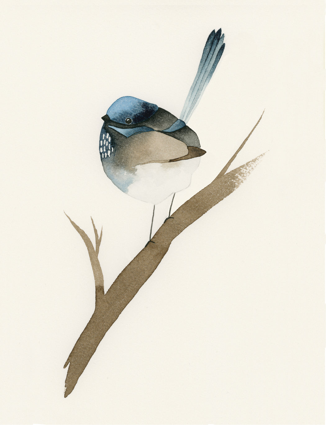 Squirrel Design Studio-Blue Fairy Wren - Greeting Card-Mott and Mulberry