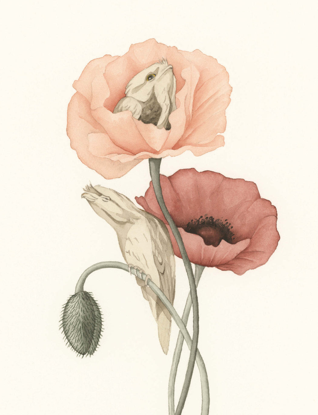 Squirrel Design Studio-Tawny Poppies  - Greeting Card-Mott and Mulberry