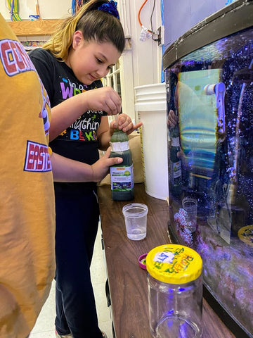 Natchaug Elementary School preparing to culture rotifers