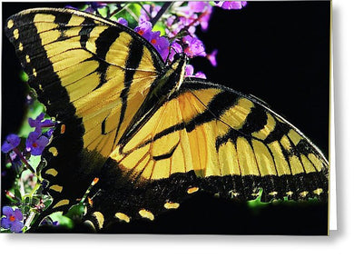 Eastern Tiger Swallowtail - Greeting Card