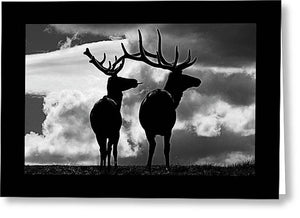 Elk Humor - Greeting Card