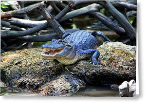 Gator In Honey Island Swamp - Greeting Card