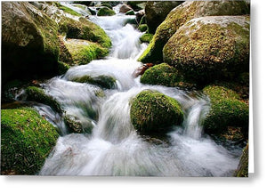 Glendalough Creek - Greeting Card