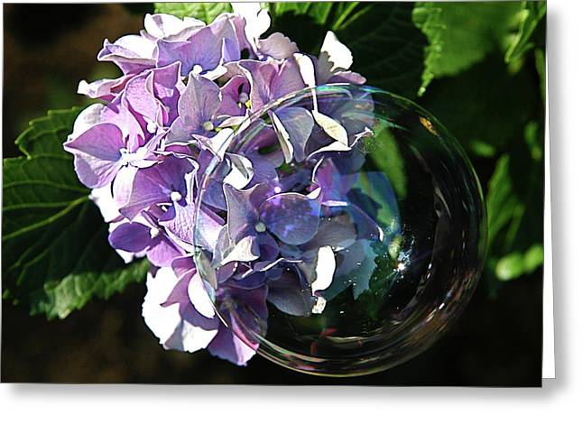 Hydrangea Bubble - Greeting Card