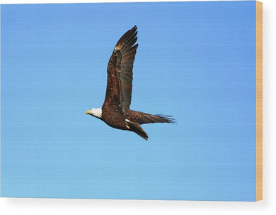 Lawrence Bald Eagle - Wood Print