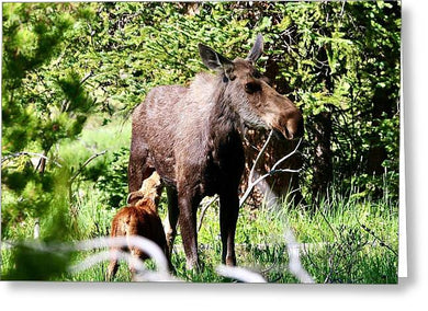 Mother Moose and Calf - Greeting Card