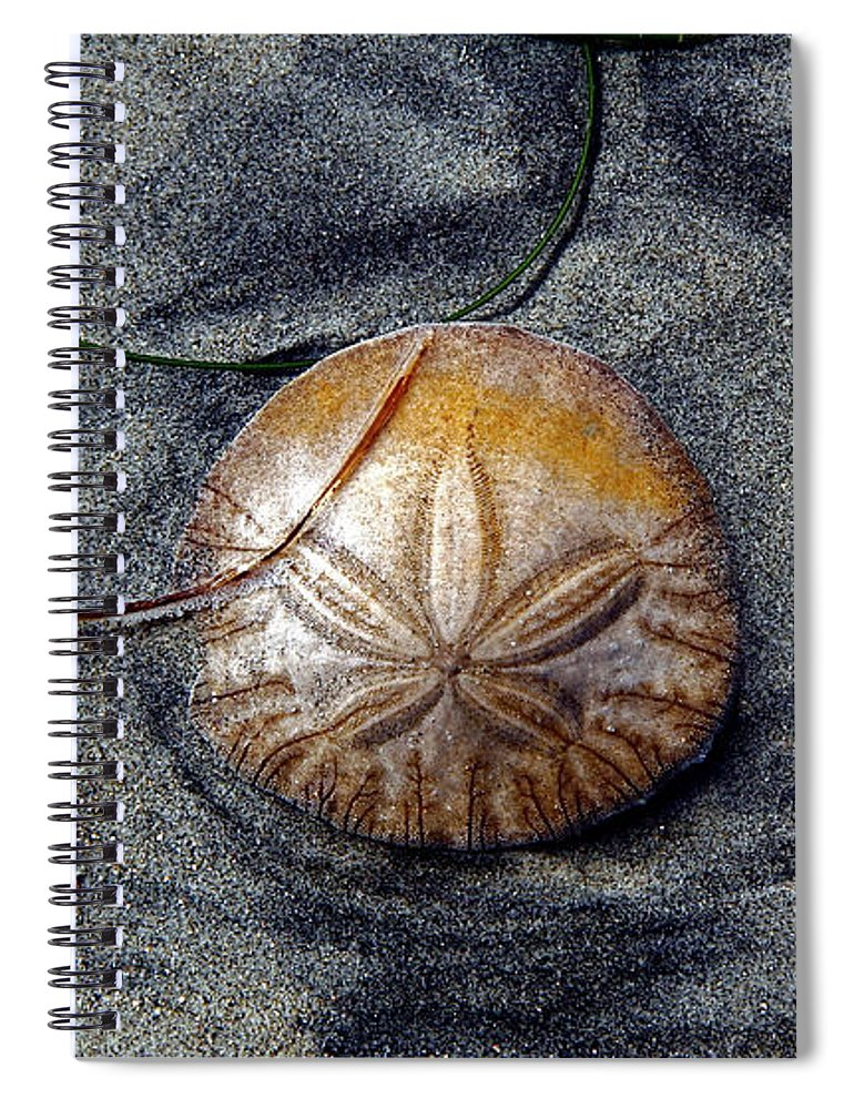San Diego Sea Dollar - Spiral Notebook