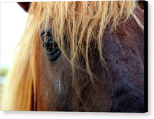 Load image into Gallery viewer, Wild Eyes Of Assateague - Canvas Print
