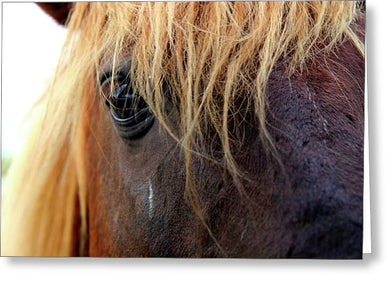 Wild Eyes Of Assateague - Greeting Card