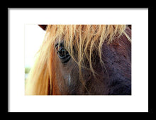 Load image into Gallery viewer, Wild Eyes Of Assateague - Framed Print