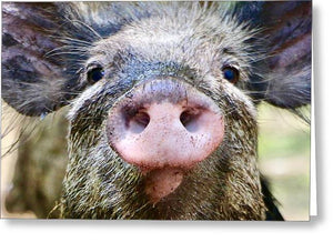 Wild Hog Face - Greeting Card