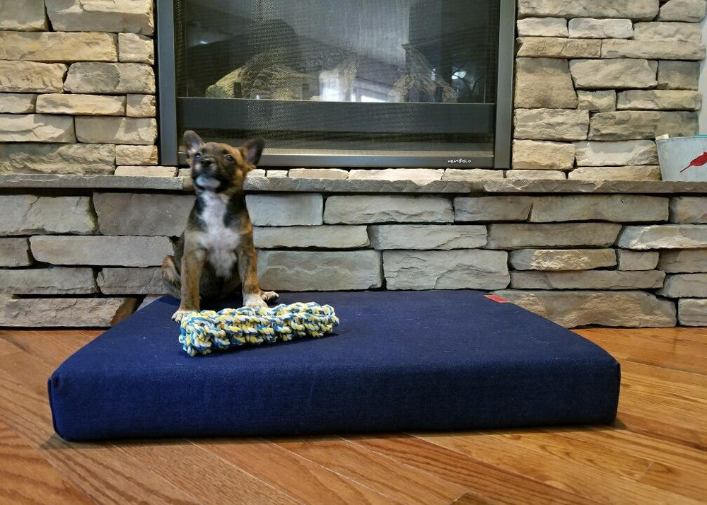 Laci the Cattle Mix
