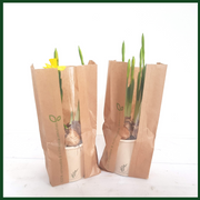 Navulling voor BloomsBox Large en Medium - Bloomsoutofthebox