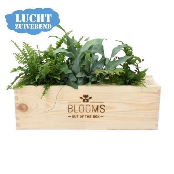 SAMPLE BLOOMSBOX VOOR SHOWROOM