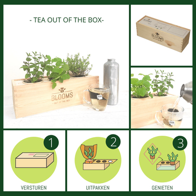 BLOOMSBOX Medium met verse theekruiden - Bloomsoutofthebox