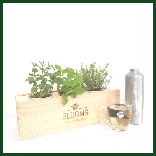 "BLOOMSBOX Medium/Large ""JOUW LOGO"" met verse theekruiden - Bloomsoutofthebox"