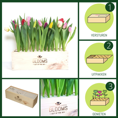 TULPEN Out of the Box - Bloomsoutofthebox