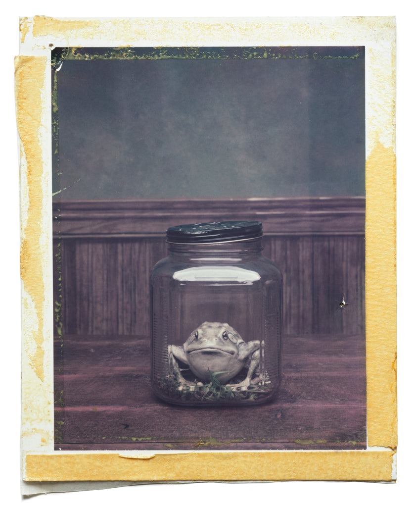 Polaroids - The Common Frog