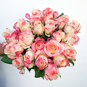 Two Tone Pink Roses