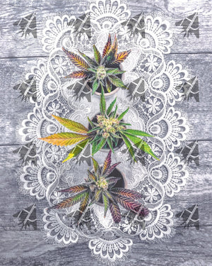 Cannabis And Lace 8 X 12