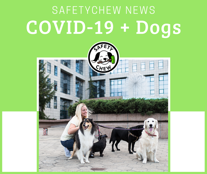 COVID-19 - How to Keep You & Your Pup Safe