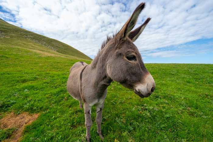 What a Donkey Taught Me About Humility