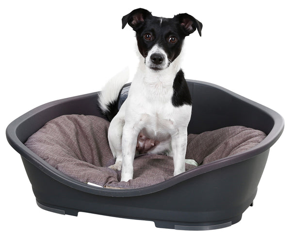 Pet Basket Plastic - No Cushion
